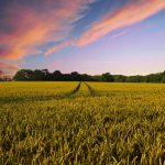 Finanza agevolata alle aziende agricole. Bando ISMEA
