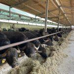 Contro la zonizzazione delle aree vulnerabili ai nitrati è ancora a ruolo solo il ricorso al TAR di Confagricoltura